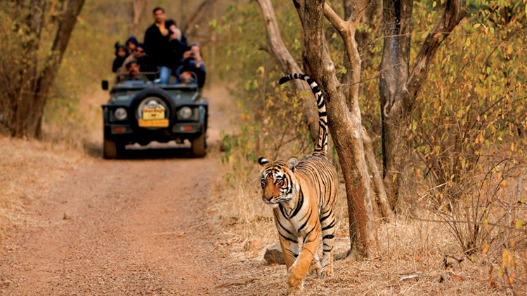 Ranthambore National Park1